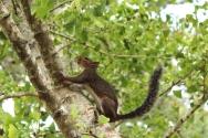 Audubon Park - Cat Landrum