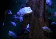 Aquarium of the Americas - Cat Landrum